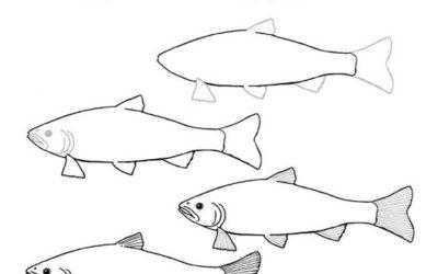 Parte y reparte el salmón: El viaje del salmón